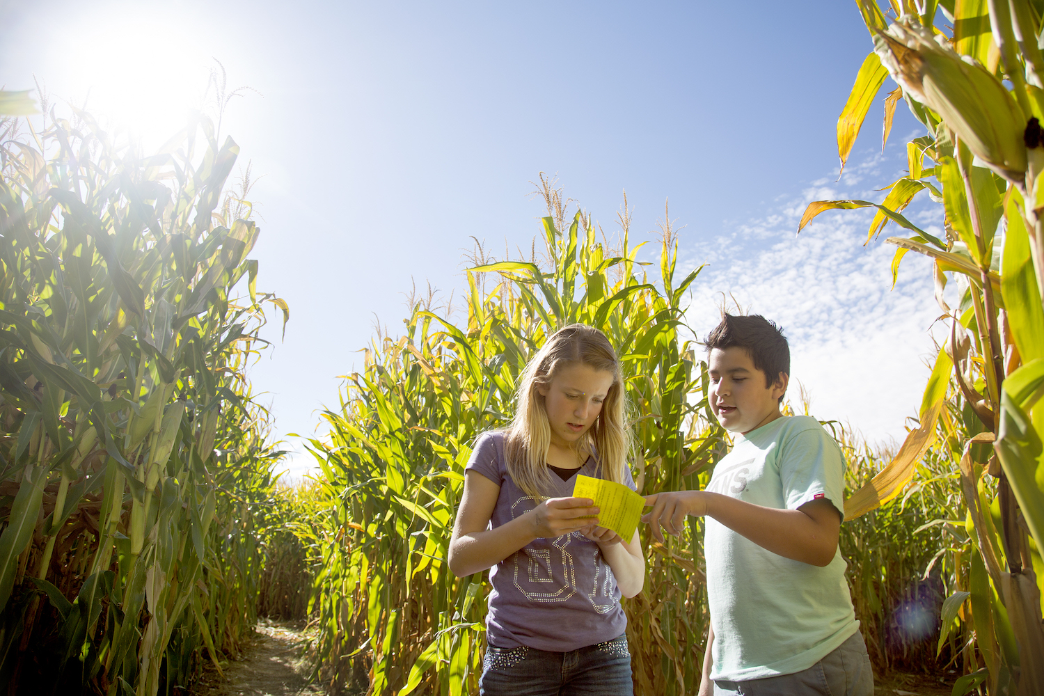 Worth The Drive: Corn mazes, concerts and a Bark in the Park